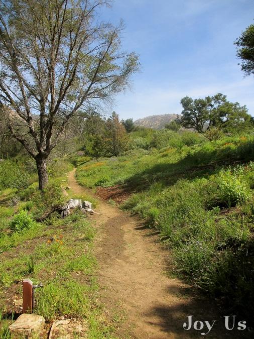 california native plant week at the santa barbara botanic