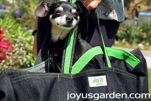 LadyBug Bag,  bag to carry pets.