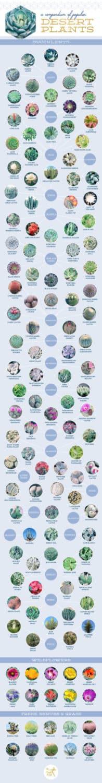 desert-plants-compendium