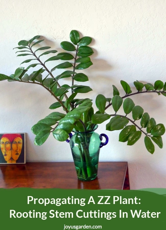 Propagating A ZZ Plant: Rooting Stem Cuttings In Water on fake plants in vases, aquatic plants in vases, house plants in containers, water plants in vases, house plants in kitchen, growing plants in vases, green plants in vases, tropical plants in vases,