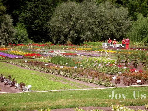 Colorful garden with variety of flowers.
