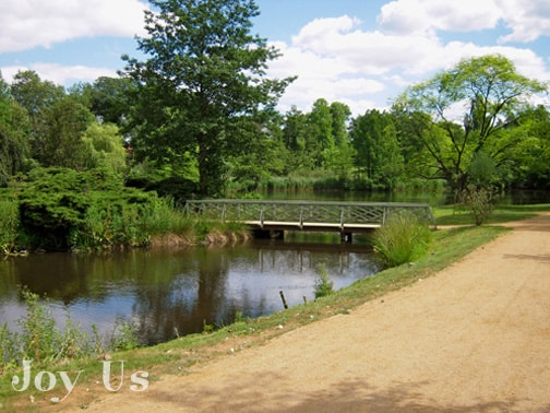 Green trees, plants, bridge and its water garden pond.