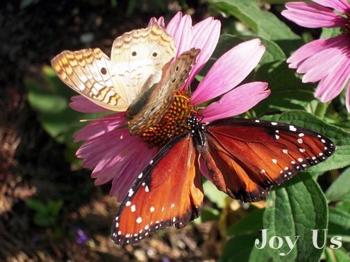 Butterflies Alive! At The Santa Barbara Museum Of Natural History