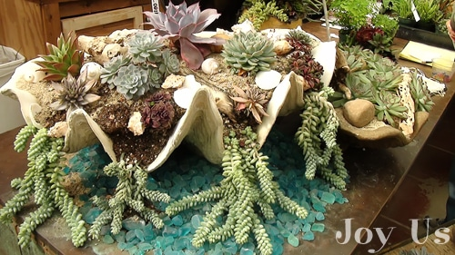 Succulents on display