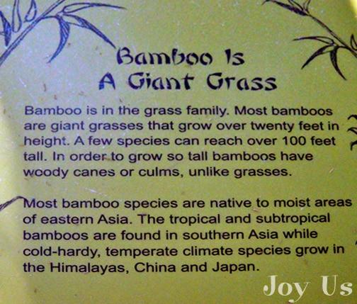 Bamboo description