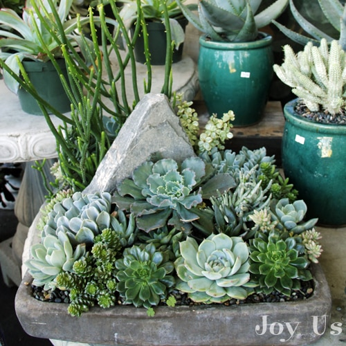 Ways to plant succulents in containers