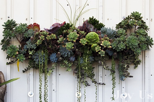 Succulent Gardens and Plantings