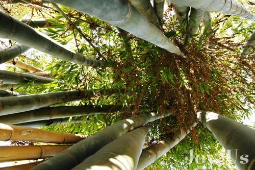 Garden of bamboo