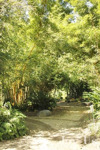 San Diego Bamboo Garden