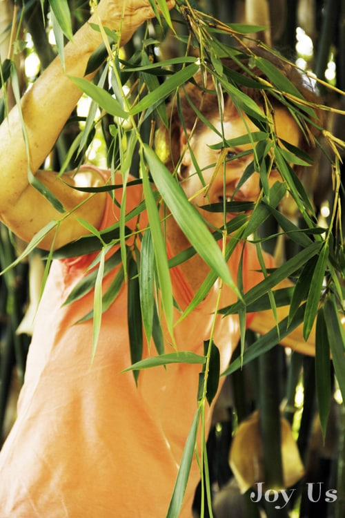 Nell in the bamboo