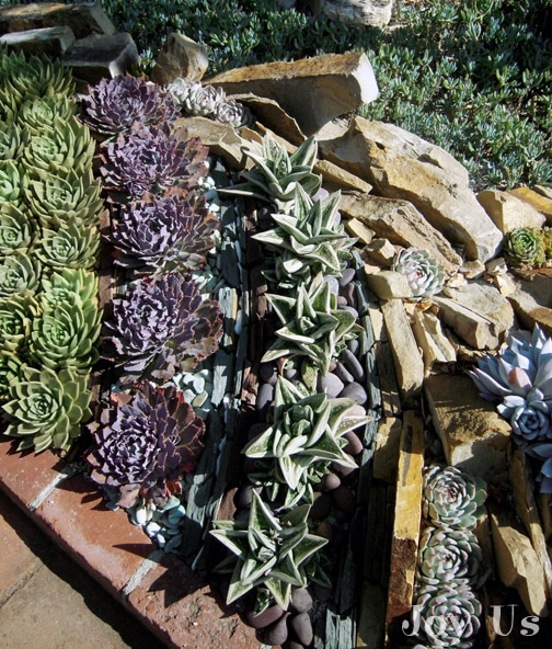 Succulent bed at Sherman library