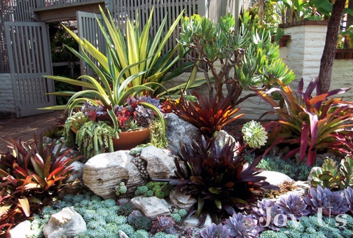 The Cactus and Succulent Garden at The Sherman Library and Gardens