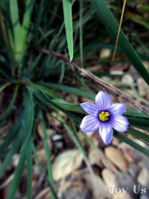 What's In Bloom At The Santa Barbara Botanic Garden