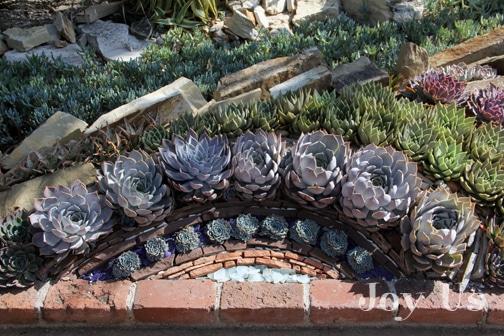 Succulents at Sherman Library