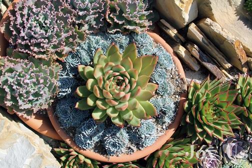 Beautiful pot display