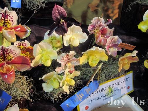 Orchid nursery