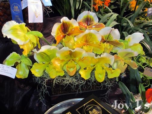 Stunning yellow orchids