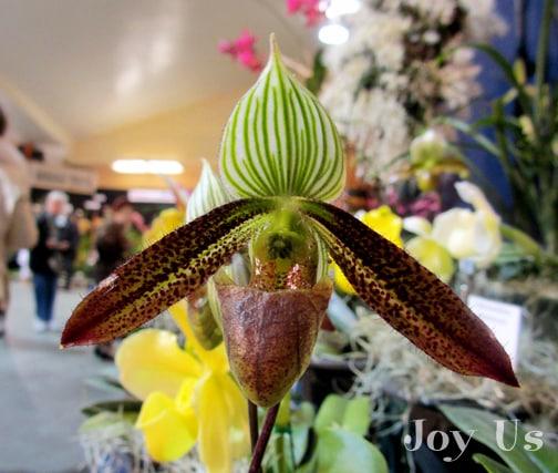 Varieties of orchids