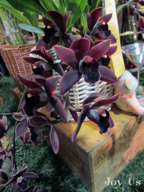 dark red Cymbidiums