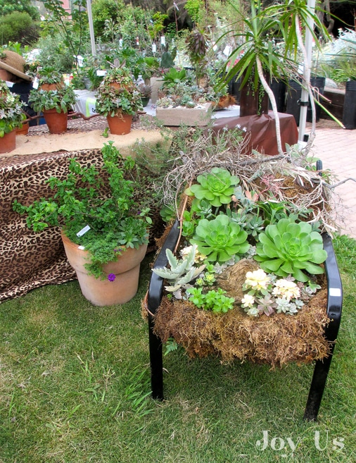 Succulents displayed on garden furniture