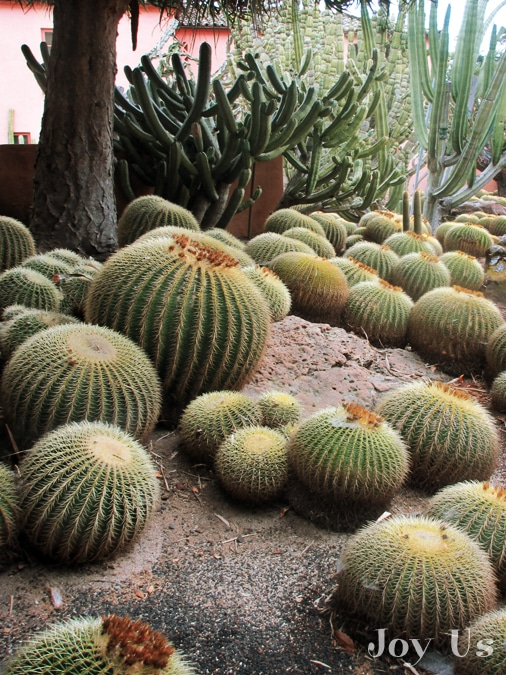 Cacti in Lotusland