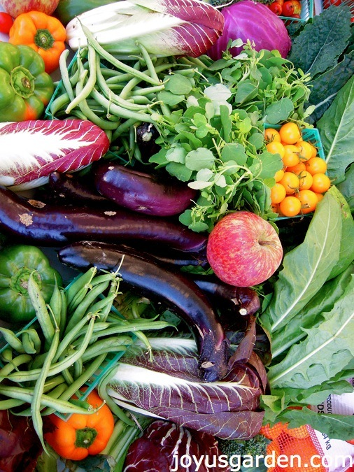 Vegetables Can Add Beauty to your Garden