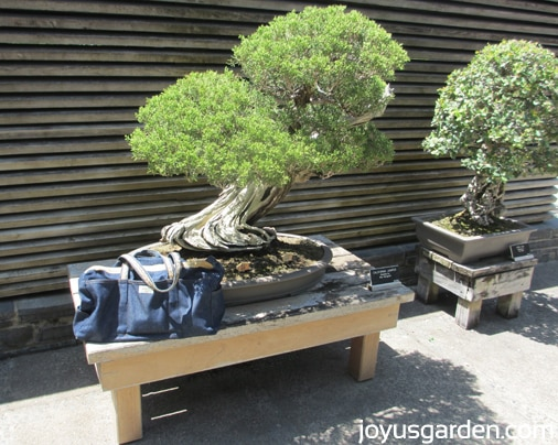 Ladybug Bag with Bonsai in the Japanese Garden