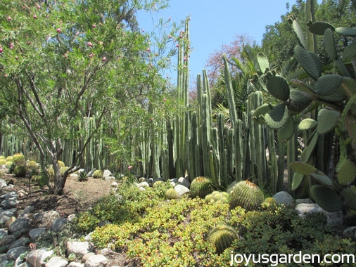 A look at the Desert Garden