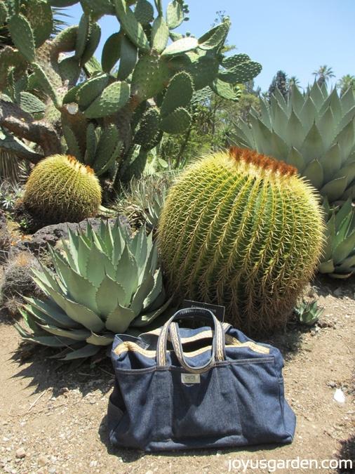LadyBug Bag at desert Garden