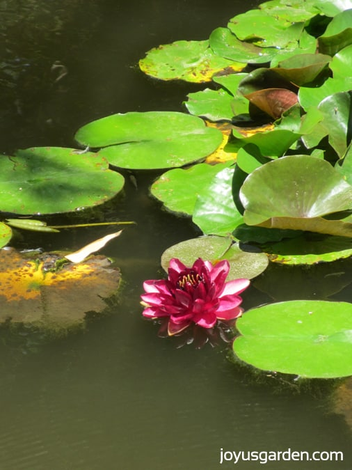 Stunning plants in the Lily Ponds