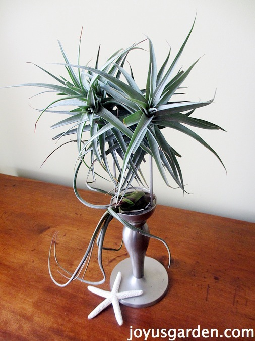 Options to display your air plants