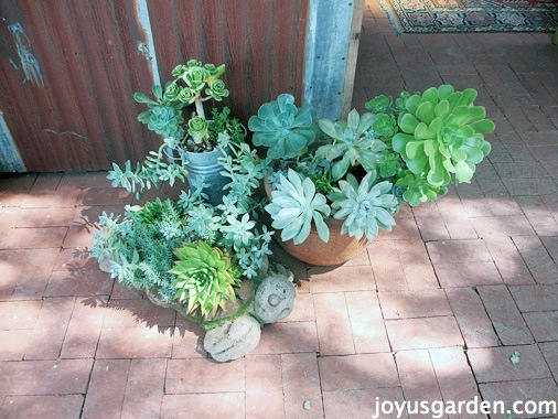Succulents everywhere