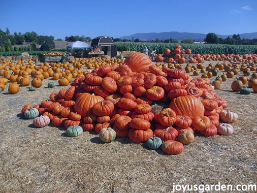 Fall Road Trip to the Santa Ynez Valley