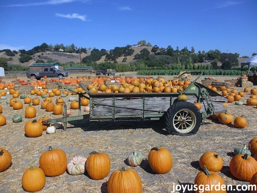 A wagon filled with pumpkins