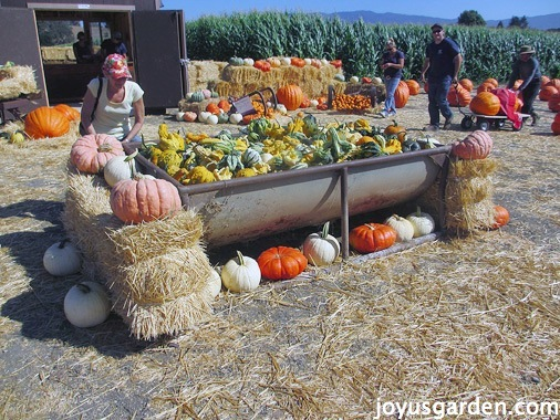 Gourds for sale and on display
