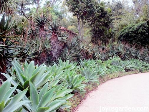 Lotusland Tour: Tropical Garden, Dracaena Trees, and More!
