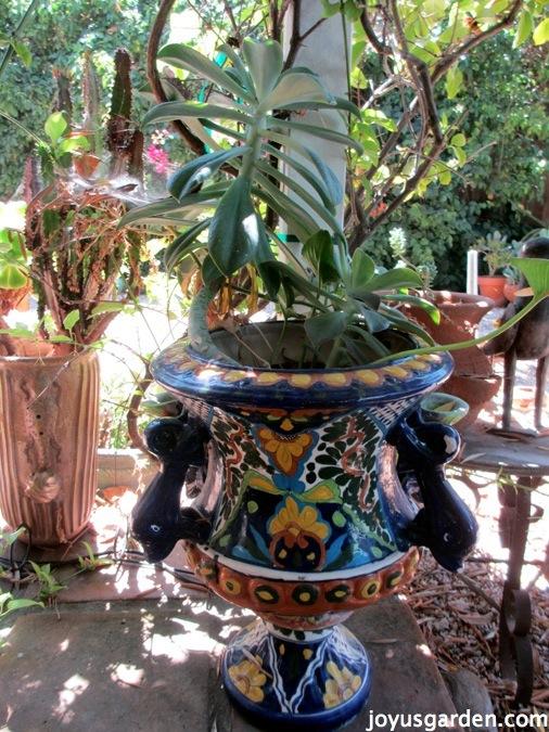 maxican pottery