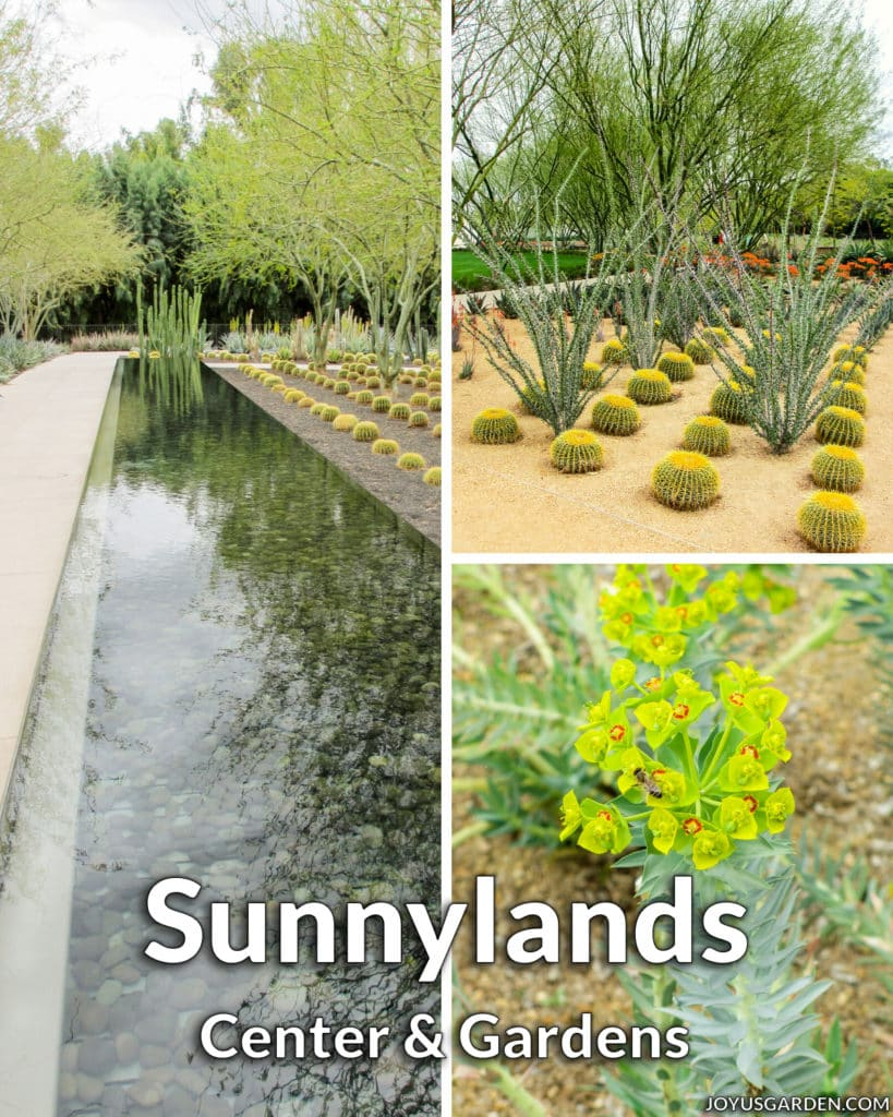 a collage of 3 photos of modern desert gardens & plants the text reads sunnylands center & gardens