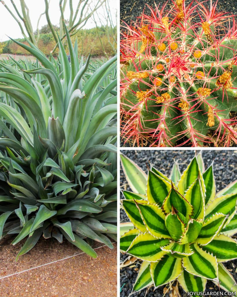 a collage consisting close ups of three different types of interesting cacti plants