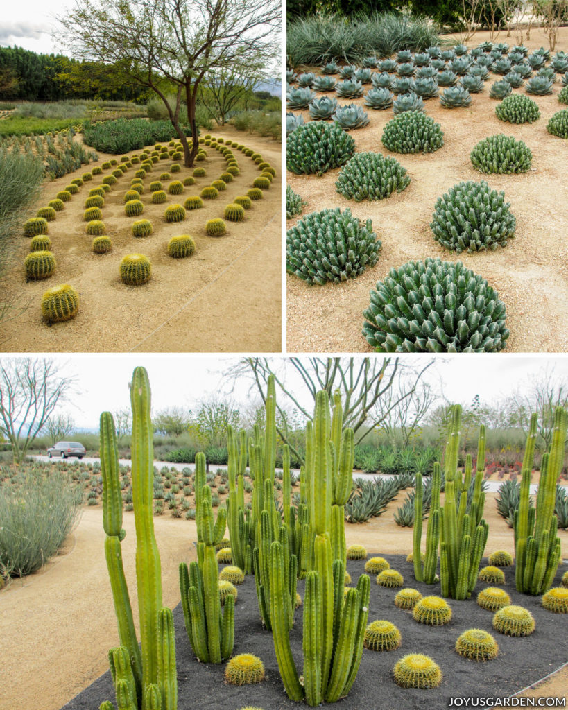 a collage consisting of three different pictures of a cactus garden, the plants are planted in geometric patterns