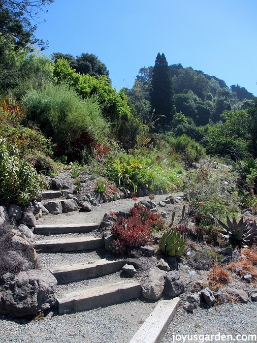 The Berkeley Botanical Garden