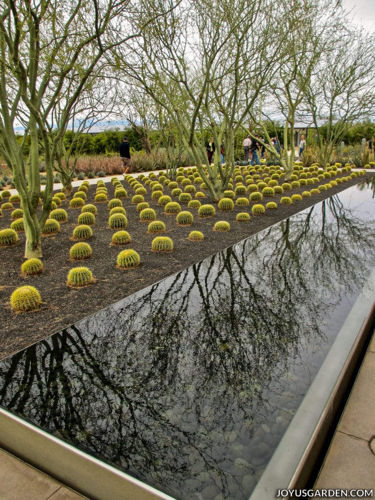 a long narrow water feature next to cacti and trees with people in the background