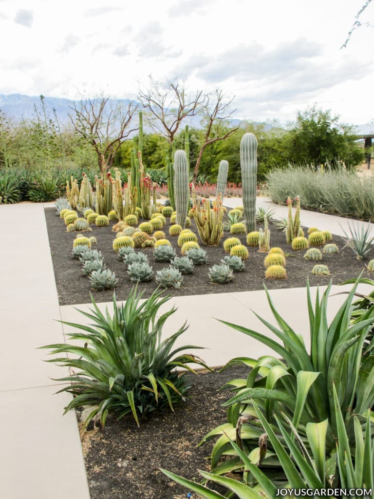 many different types of cacti in a modern desert garden with mountains in the background