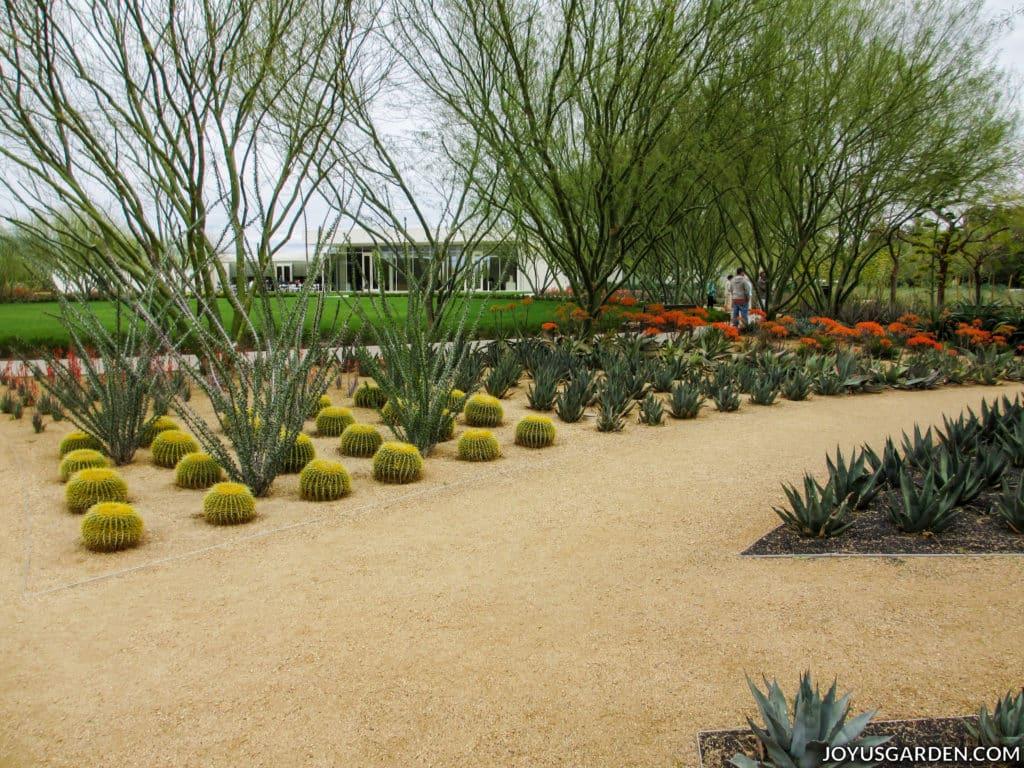 a dirt walkway in a modern cactus garden