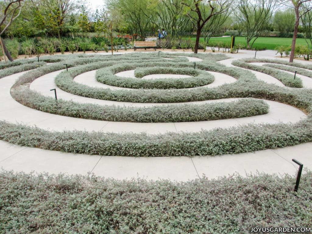 a labyrinth made of grey-green plants in a garden