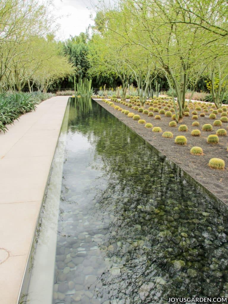 a long narrow water feature in a desert garden