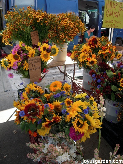 Stunning flower displays