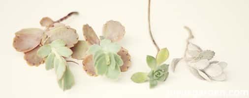 How To Make A Simple Corsage With Flowers & Succulents