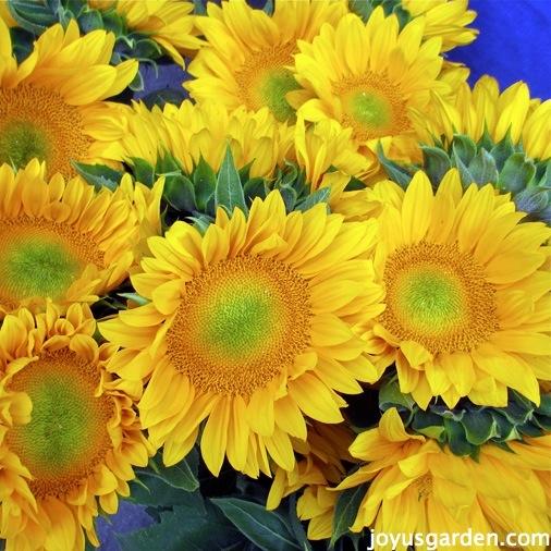 Fabulous Fresh Cut Flowers