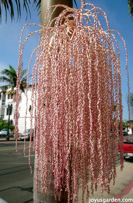 flowering trees in Southern California